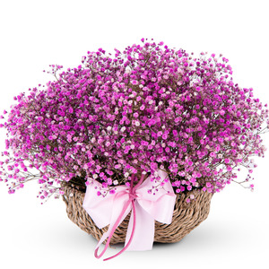 핑크 안개 꽃바구니(예약상품)