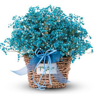 파랑 안개 꽃바구니