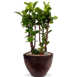 떡갈나무 20호 (170cm내외)